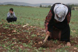 يوم المرأة الفلسطينية العربية
